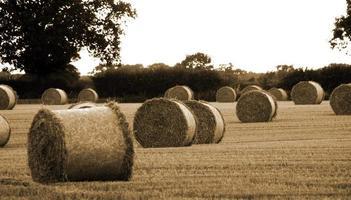 Strohballen in einem Suffolkfeld foto