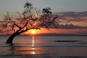 einsamer hintergrundbeleuchteter Baum foto