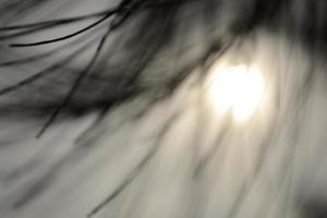 Silhouette von Kiefernblättern foto
