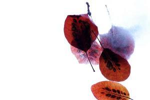 isolierte Herbstblätter