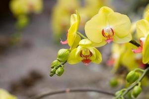 schöne Orchideen foto