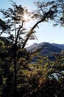 patagonischer Wald foto