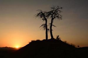 Natur und Bäume foto