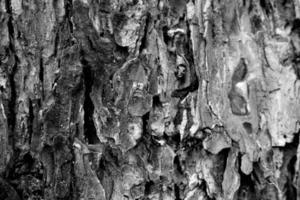 Detail der Baumrinde, schwarz und weiß