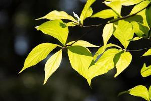 grüne Blätter vor heller Hintergrundbeleuchtung