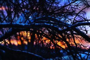 Dämmerung durch Zweige: bunter Sonnenuntergang hinterleuchteter Baum foto