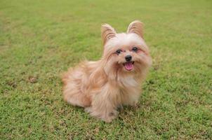 fröhlicher Hund foto