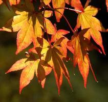 rostrote Blätter.