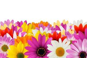 fröhliche Gänseblümchengrenze foto