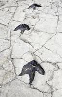 prähistorische Fußabdrücke von Dinosauriern foto