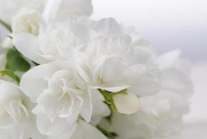 weiße Jasminblüten Nahaufnahme mit Kopienraum foto