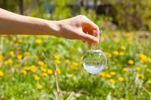 Kolben mit klarem Wasser und grünen Pflanzen foto