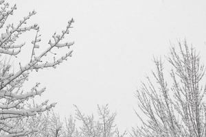 schneebedeckte Bäume und bewölkter Himmel mit Kopierraum foto