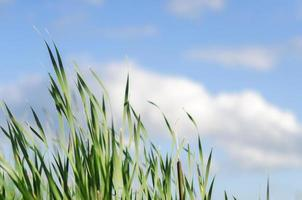 buntes hohes grünes Gras im Sommer mit Kopienraum foto