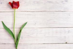 rote Tulpenblume auf hölzernem Hintergrund. Draufsicht, Kopierraum