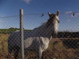 trauriges Pferd foto