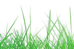 grünes Gras foto