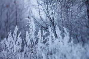 gefrorene Pflanzen, Winterhintergrund foto