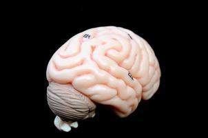 menschliches Gehirn foto