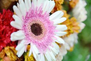 Nahaufnahme Blumen foto