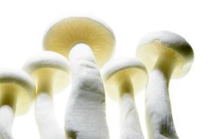 Nahaufnahme des Pilzes foto