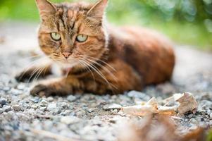 Katze in der Natur foto