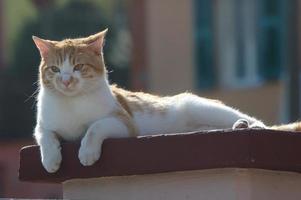 streunende Katze foto