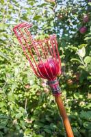 Apfelpflücker mit rotem Apfel