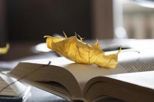 Blätter auf offenem Buch. foto