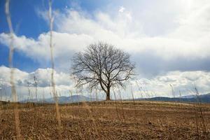 Walnussbaum auf einem Hügel foto