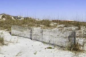 Umweltstudie in Florida foto