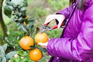 Kind auf Orangenfarm foto