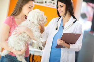 Tierarzt tröstet maltesischen Hund foto
