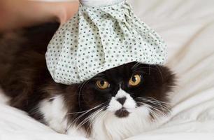 Schwarzweiss-Katze mit gemusterter Wasserflasche auf dem Kopf foto