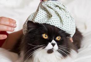 Katzengrippe foto