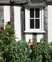 Fenster und Rosenbusch foto