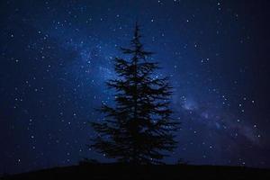 Silhouette der Kiefer und der Milchstraße foto