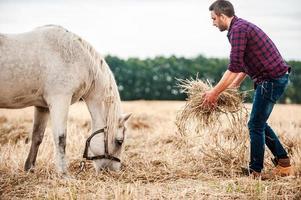 kümmert sich um sein Lieblingspferd. foto