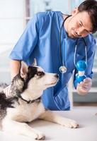 Tierarzt foto