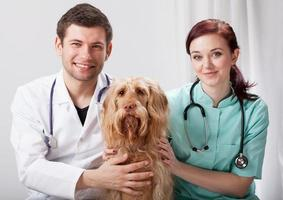 Porträt eines Hundes mit zwei Tierärzten foto