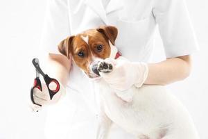 Welpe zum Tierarzt, Krallen schneiden foto