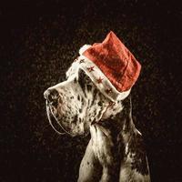 Deutsche Dogge Santa gratuliert frohen Weihnachten und Neujahr