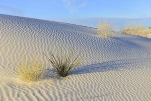 Muster in weißem Sand foto