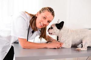fröhliche junge blonde Veterinär, das sich um Hund französische Bulldogge kümmert foto