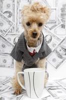 Geschäftshund mit Kaffee und Bargeld foto