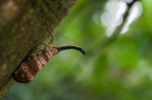 kleines Insekt im Dschungel foto