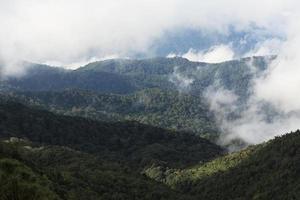 Dschungelwald und Berg mit Nebel foto