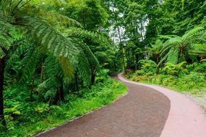Weg durch Dschungel, Azoren, Portugal, Europa foto