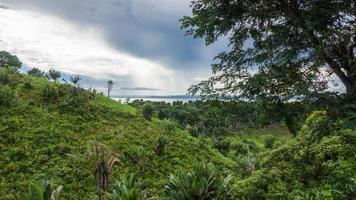 ikalalao Dschungel foto