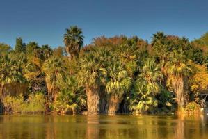 Dschungellagune foto